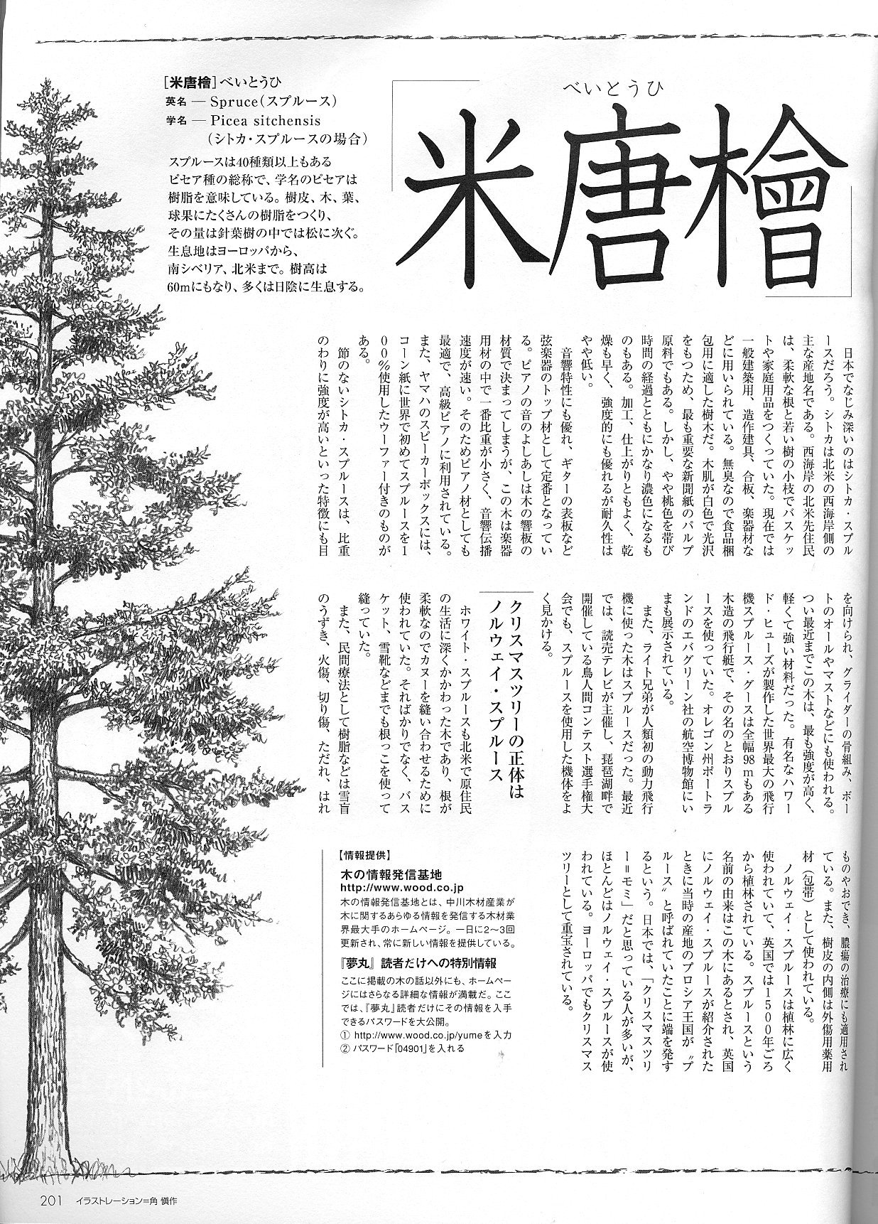 夢丸レットシダー/ベイスギ