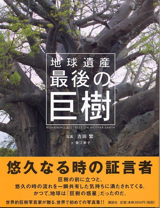 最後の巨樹